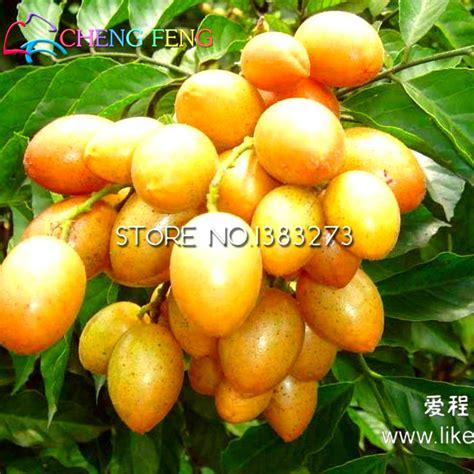 Bibit Benih Seed Pohon Jepang Japanese Flowering Cherry Tree buy grosir jepang naik from china jepang naik penjual aliexpress alibaba