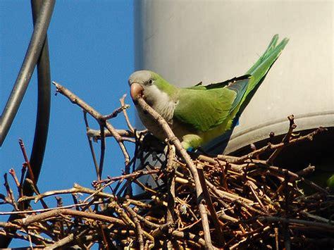 why do birds build nests mccnsulting web fc2 com