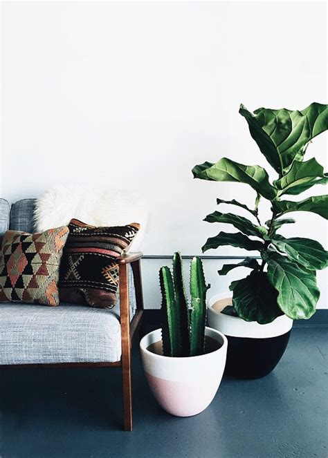 modern houseplants modern planters for your houseplants