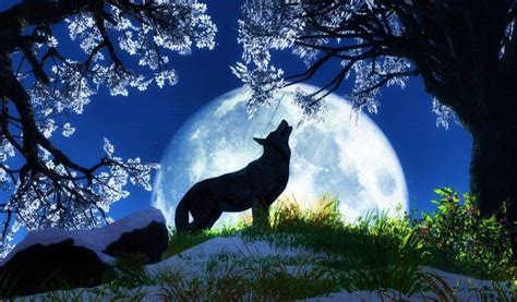wallpaper cool wolf cool wolf backgrounds wallpaper cave