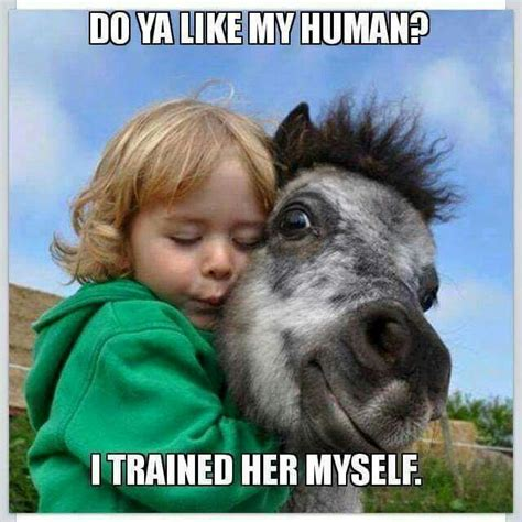 hilarious horse memes the original mane n tail animal
