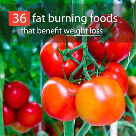 healthy fats help weight loss 36 foods that burn help you lose weight bembu