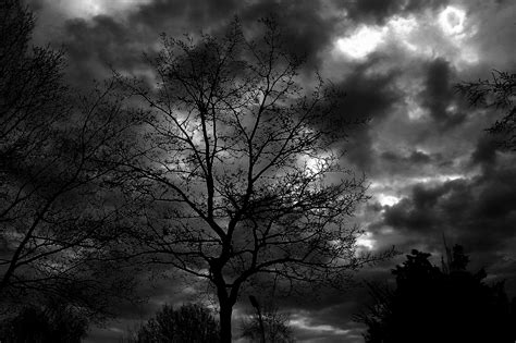 kostenlose foto baum natur wald ast licht stra 223 e sonnenlicht blatt blume gr 252 n kurve kostenlose foto baum natur wald ast licht wolke schwarz und wei 223 himmel sonne nacht
