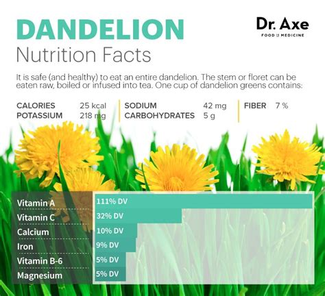 dandelion facts 1000 ideas about liver detox supplements on pinterest