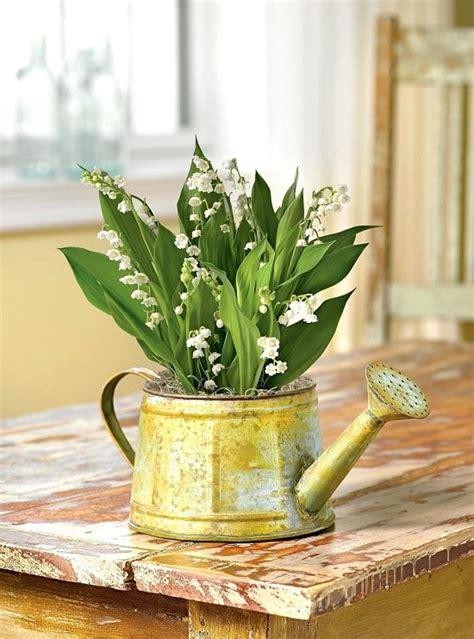 smelling fragrant indoor plants   grow