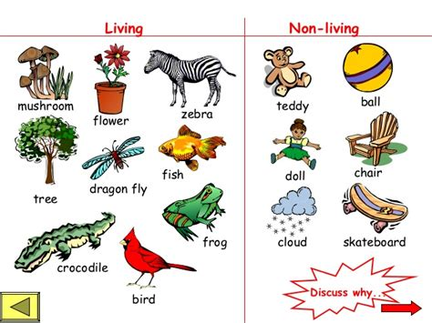 living and non living things powerpoint 1