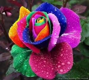 multi color roses discover and save creative ideas