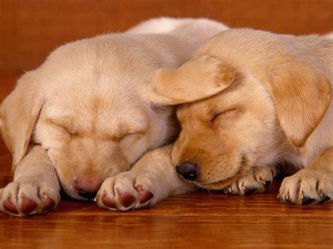 really really puppies really dogs wallpaper