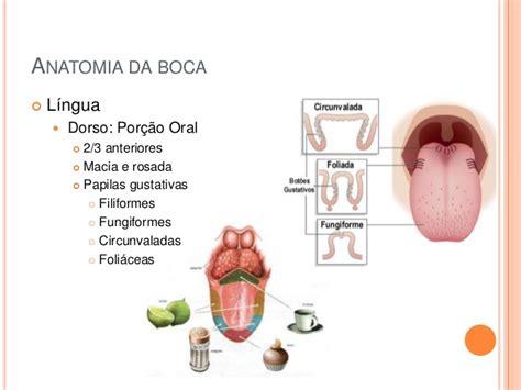 vestibulo bucal anatomia anatomia bucal