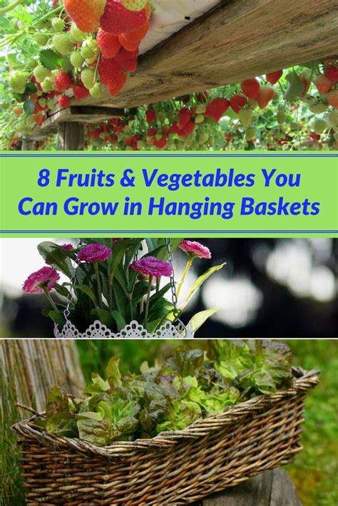 8 vegetables in 8 fruits vegetables you can grow in hanging baskets