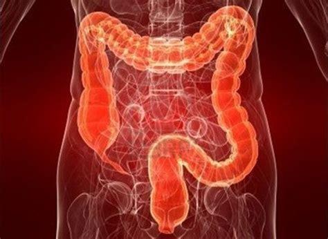 Cacing Dan Cacing Darah ilmu kesihatan terhadap kesan cacing yang ada di dalam