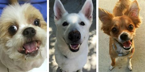 places to adopt dogs 10 great places to adopt a in southeast michigan puppy leaks