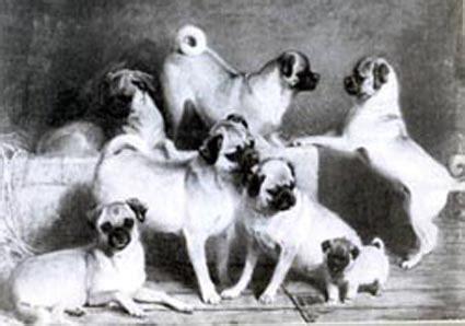 are pugs a family charles burton barber il pittore di animali pimp my pug
