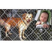 Horror As Family Dog Kills And Dismembers Two Month Old