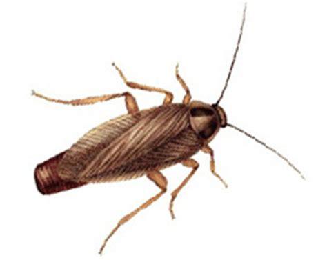 déterminer les insectes nuisibles dans la maison gvb