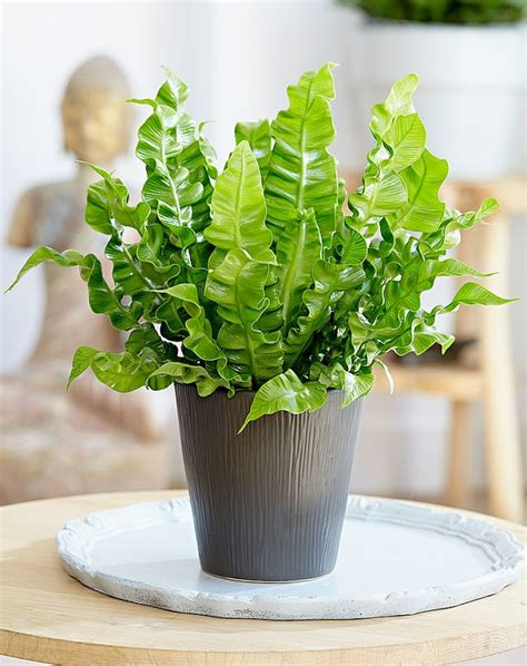 Small Plants For Office Desk 29 Most Beautiful Houseplants You Never Knew About Balcony Garden Web