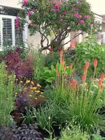 drought tolerant plants gardening pinterest