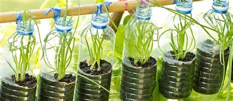 Containers For Vegetable Gardening - plastic bottles recycle or repurpose the permaculture research institute