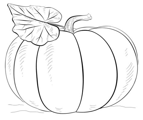 simple pumpkin coloring pages 手绘南瓜简笔画图片大全 卡通南瓜简笔画怎么画 简笔画大全