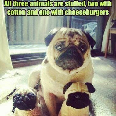 pug stuffed philippines 92 best pugs images on doggies dogs and a