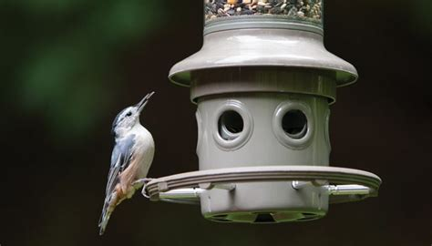squirrel proof wild birds unlimited wild birds unlimited