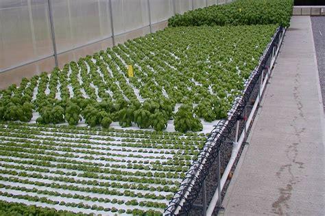 Nft Hidroponik american hydroponics nft systems grozinegrozine