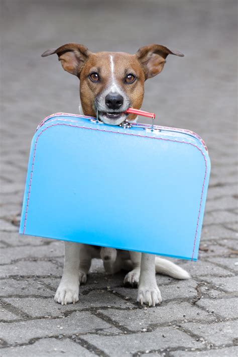 puppy suitcase live to run again saving safety tips
