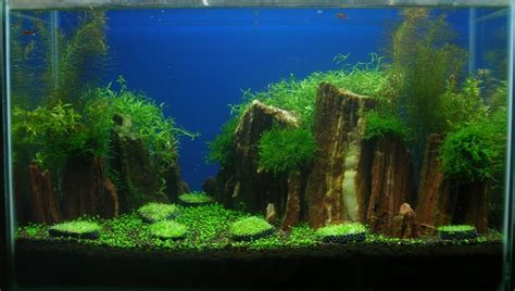 aquascaping world aquascaping world competition gallery red iwagumi by