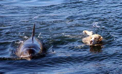 boat names after dogs white wolf dog swims with wild dolphins video