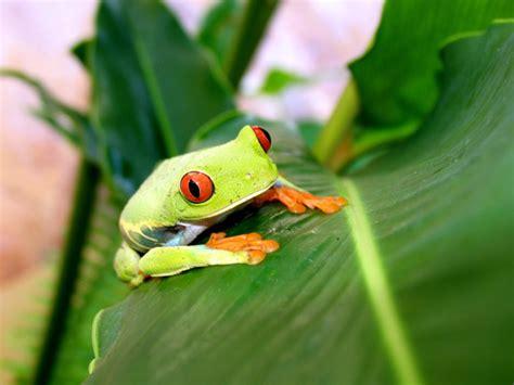 imagenes groseras de la rana curiosidades y fotos de animales rana