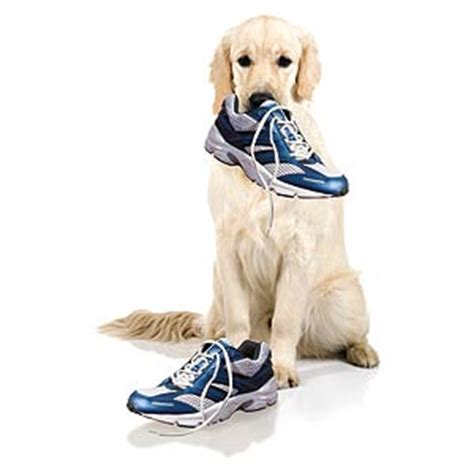 running shoes for dogs holding a running shoe