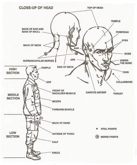 diagram of pressure points on the human human pressure points diagram anatomy organ