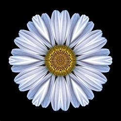 pretty painted floors with flower designs white daisy flower mandala photograph by david j bookbinder