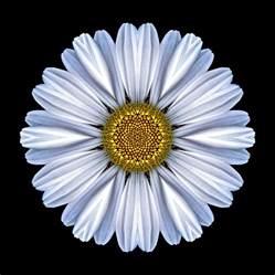 Daisy Duvet Cover White Daisy Flower Mandala Photograph By David J Bookbinder