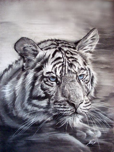 white tiger tigers fan art 31737992 fanpop