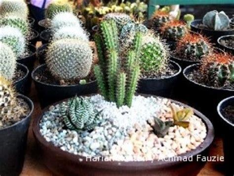 Jual Lu Hias kaktus mini yang menebarkan untung 1