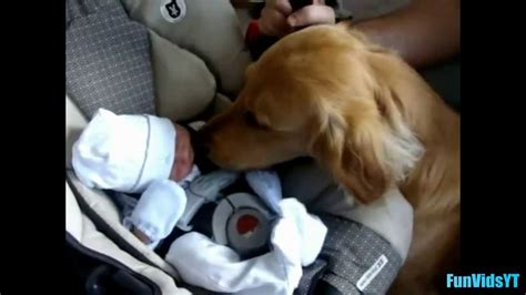 dogs meeting babies dogs meeting babies for time compilation 2014 new hd