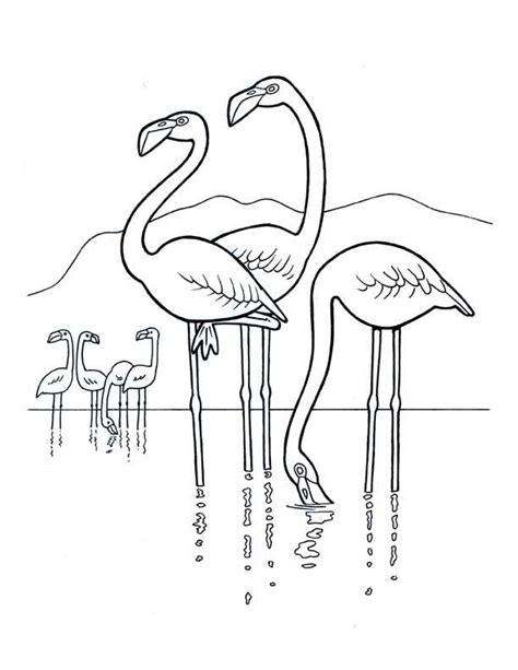 Desenho de Flamingos no rio para colorir   Tudodesenhos
