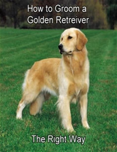 how to groom a golden retriever how to groom a golden retriever the right way by doreen schipper ebook lulu