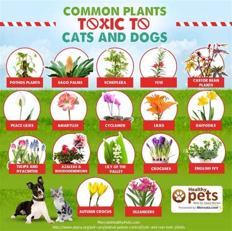 what plants are poisonous to dogs 34 best poisonous plants for dogs images on pinterest