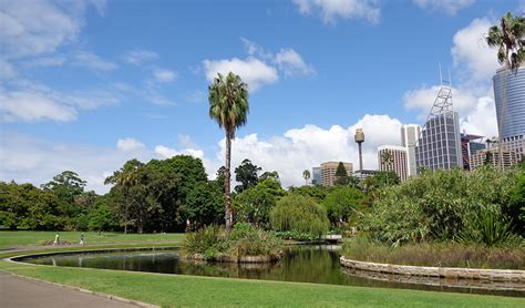 Botanical Gardens In Sydney Bird Watchers Guide To Sydney Australian Geographic