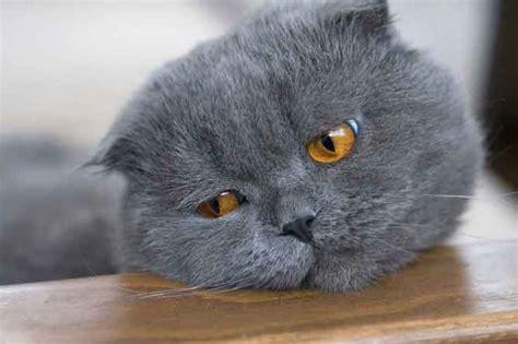 imagenes gatos tristes fotos de gatos tristes hogarutil
