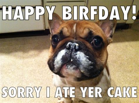 puppy singing happy birthday happy birthday puppy dogs singing litle pups
