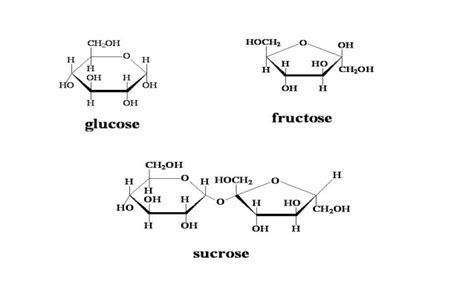 quia biomolecules vocabulary