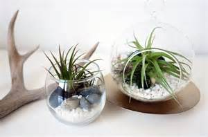 diy air plant terrariums ebay style stories