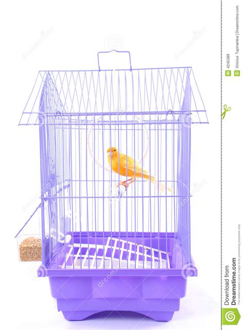 canary bird cage stock photos canary in the cage royalty free stock images image 4245389