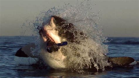 evidence of a 50 ton megalodon shark week discovery evidence of a 50 ton megalodon shark week discovery