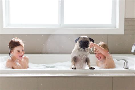 pugs and children session pug part two a personal project from kapala of