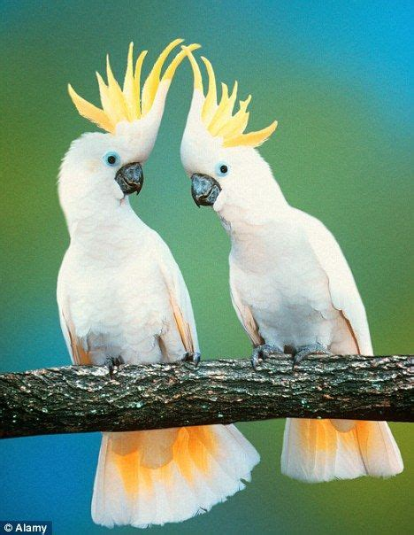 25 best ideas about birds on pinterest beautiful birds