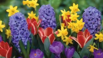 spring flowers free large images beb320 aol com pinterest spring flowers flowers and